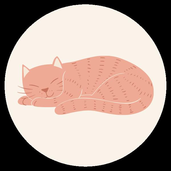cat care blog