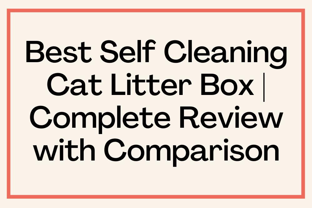 Best Self-Cleaning Cat Litter